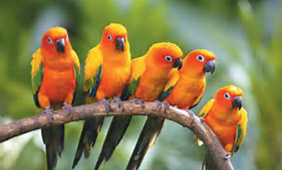 High Flyers UK Couriers - TROPICAL BIRDS PRICES